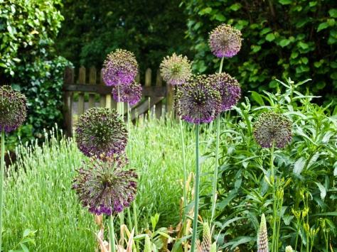 Garden-6061396